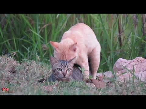 Cats Find Successfully Today - Funny Cat Compilation 2018