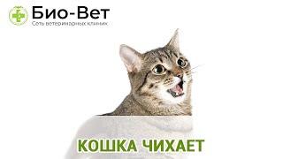 Кошка чихает. Ветеринарная клиника Био-Вет