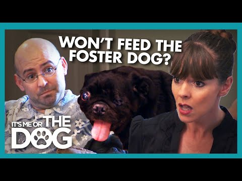 Victoria Walks Out During Argument About Foster Pug | It's Me or the Dog
