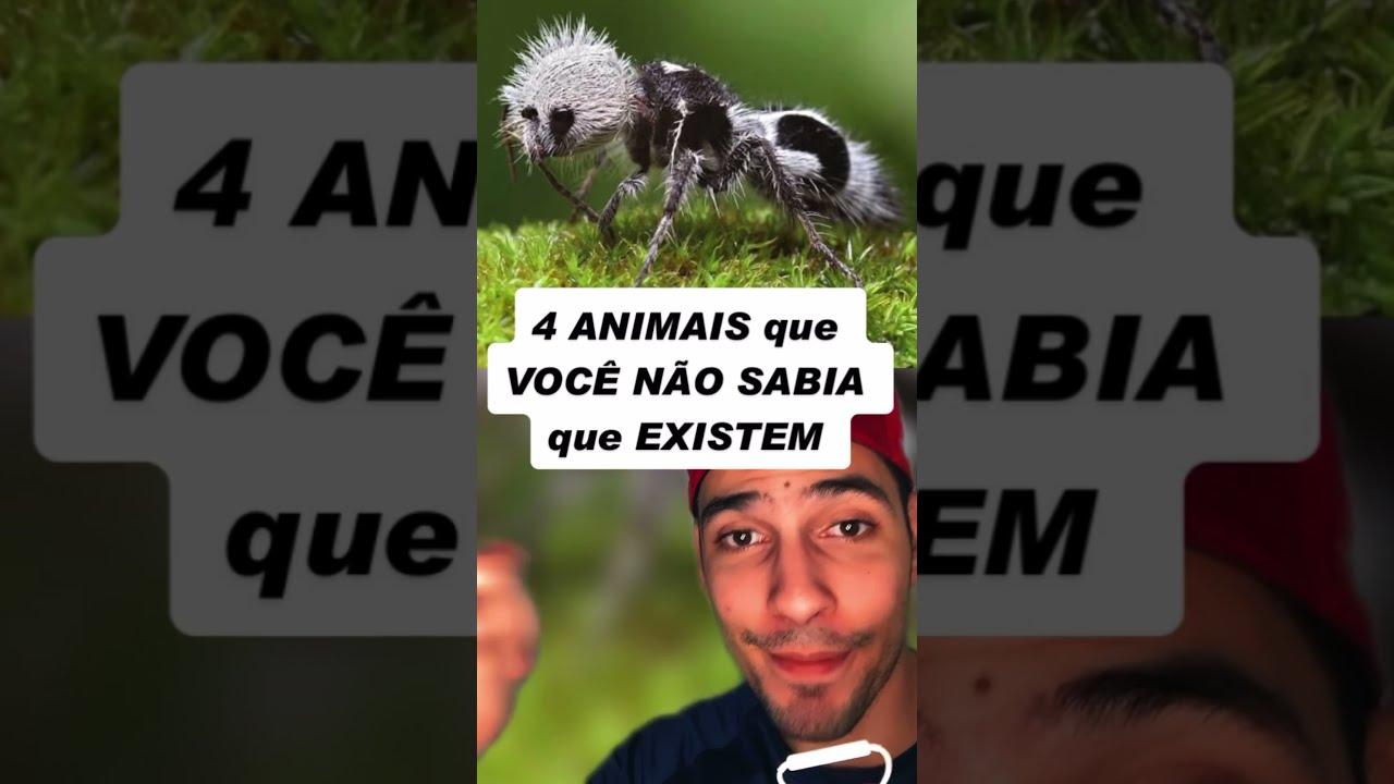 4 ANIMAIS QUE VOCÊ NÃO SABIA QUE EXISTEM / 4 ANIMALS YOU DIDN'T KNOW CURRENTLY EXISTS