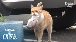 Mother Cat Starves But Carries A Bag Of Food To Feed Her Kitten | Animal in Crisis EP173