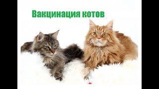 Обязательно ли домашним кошкам делать прививки