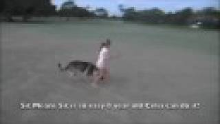 Sit Means Sit Dog Training Maui Hawaii Celia