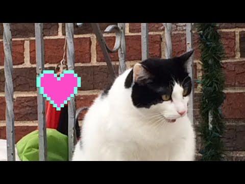 My Cat Documentary of my cat!😻