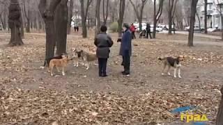 В Одессе 748 случаев нападений на людей  домашних собак