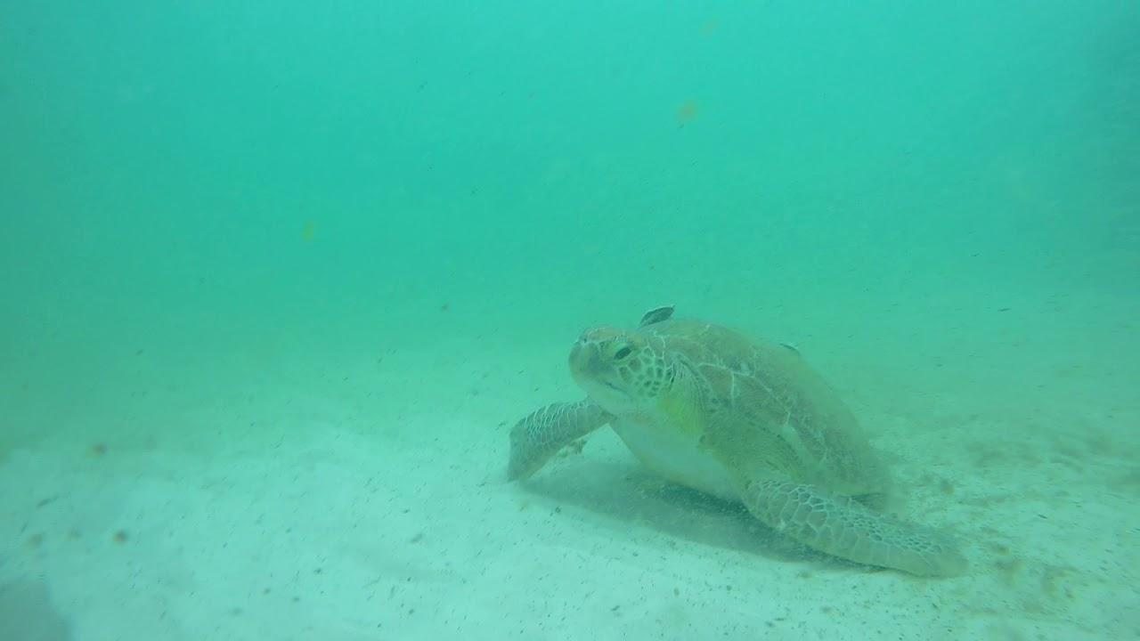 Navarre Beach Gulf Snorkel Reef