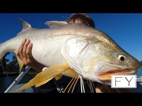Fitzroy River Threadfin