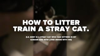 HOW TO LITTER TRAIN a STRAY CAT