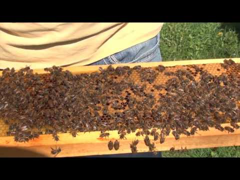Beekeeping : How To Make A Spring Split Part 1
