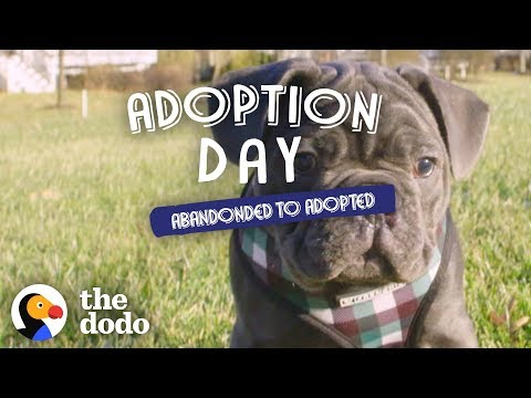Blind Rescue Puppy Wins Over Every Member Of His New Family | The Dodo Adoption Day