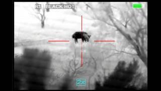 Armasight Zeus 640 Thermal Hog Hunt November 2014