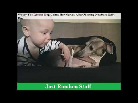Weezy The Rescue Dog Calms Her Nerves After Meeting Newborn Baby Boy