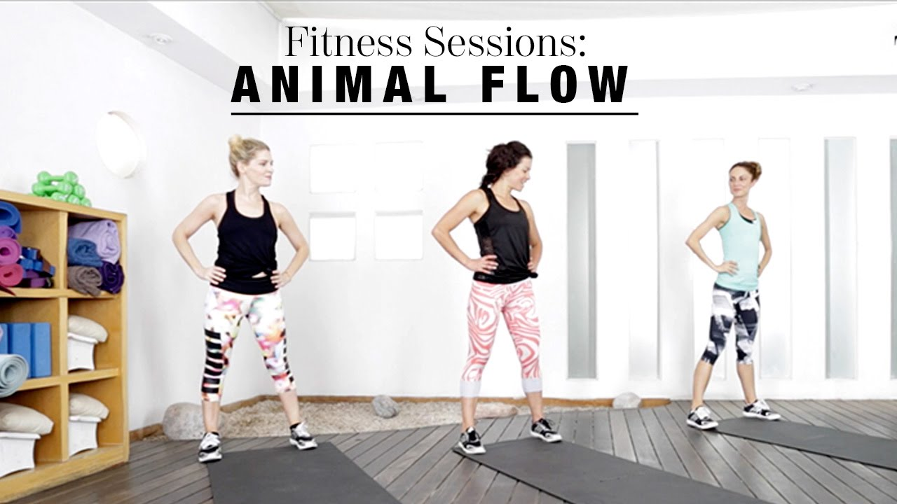 view video animal session