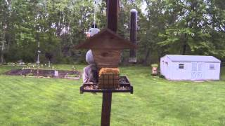 May 11th 2013 Birds On The Bird Feeder