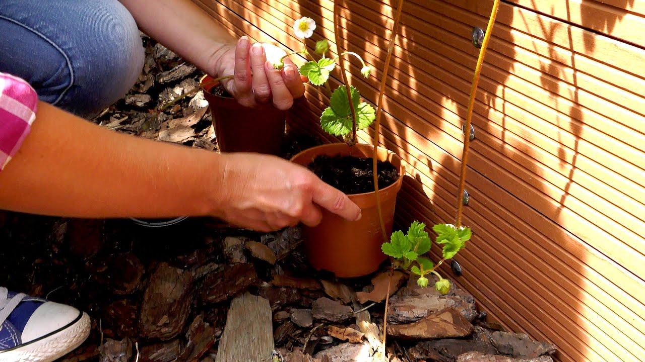 Lipiec w ogrodzie. Kalendarz ogrodnika na 29.06 - 05.07. Prace ogrodnicze w lipcu