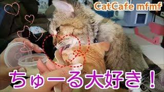 みんなちゅーる大好きですね~。 子猫さんも食べやすそうです。 アーサ...