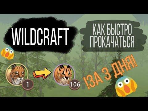 WildCraft / Как быстро прокачаться / За 3 дня / How To Pump Fast