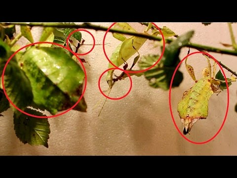 how to make stick insect eggs hatch faster