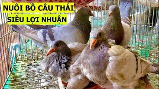 Lời giải cho bài toán tại sao nên nuôi bồ câu Titan Thái Siêu Thịt