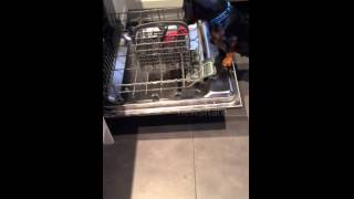 Adorable Dachshund Places Toy In Dishwasher