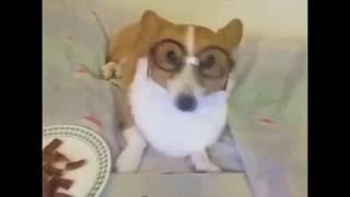 Приколы смешные собаки