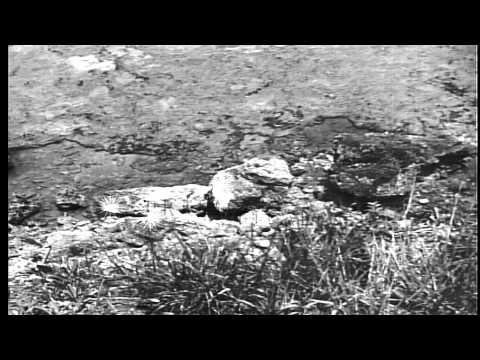 Japanese soldiers assembled in field to surrender themselves to US soldiers, Okin...HD Stock Footage