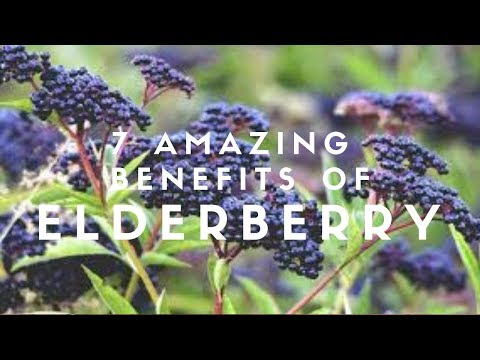 7 Amazing Benefits Of Elderberry