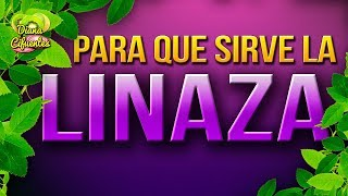 Para Que Sirve La Linaza - Propiedades, Beneficios Y Contraindicaciones De La Linaza