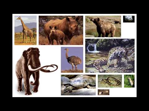 Miegunyah Lecture 2014 - The First Humans out of Africa: Hominin Dispersal in the Old World