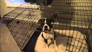 Roscoe (boxer) Before And After Crate - Raleigh Durham Dog Trainer
