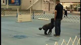 Utility Dog Obedience Competition - Richmond, Bc