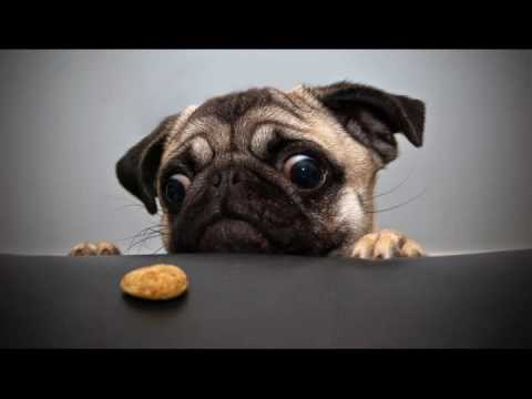 60 HD Dog Wallpapers