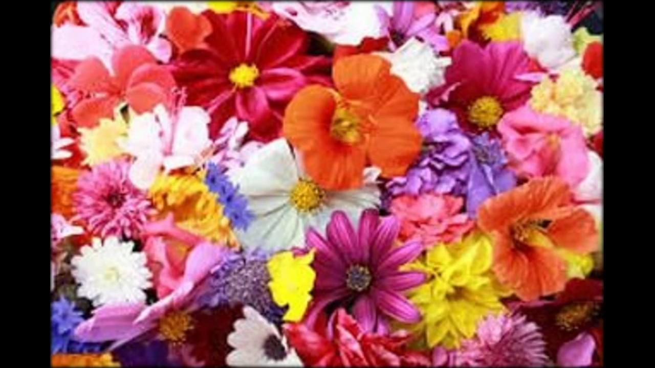 Семена и клубни трав и цветов, луковицы цветов, цветочные клубни, цветочные луковицы, цветочные семена, семена трав, луковицы тюльпанов. Продажа, поиск, поставщики и магазины, цены в украине.