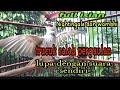 Burung Trucuk Full Isian Wambhi Dan Nightingale Cocok Buat Masteran Burung Trucuk Mudah Di Tirukan  Mp3 - Mp4 Download