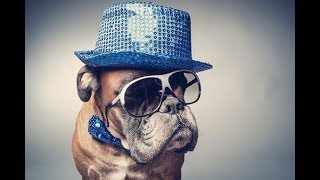 Odd Jobs: How to get your pet into show business