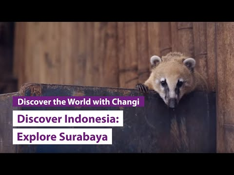 Discover Indonesia: Surabaya