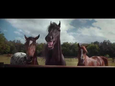 werbung einparken ohne lachnummer lachende pferde tiguan volkswagen auto youtube