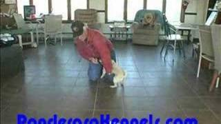Puppy Training Come When Called, Beginning Dixie Cup Drills