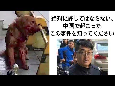 罪のないゴールデンレトリーバーを虐殺した中国の警察官が表彰された事件について China: Golden Retriever Beaten to Death by police officer