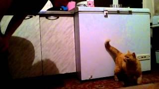 Кот любит хозяина.