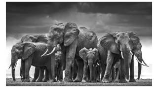 David Yarrow Reveals his Photography Secrets - Learn Photography