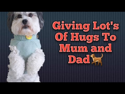 Smart Shihtzu Dog Doing Tricks With Mum and Dad