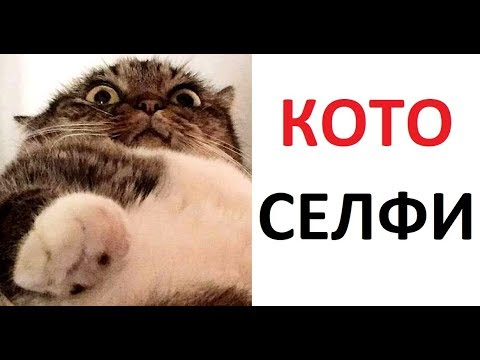 Лютые приколы. Кот