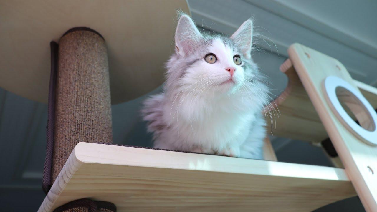 집사가 나가자 서글피 우는 고양이