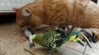 Неразлучные друзья .Собака,Кот,Попугай и Хомячек. Очевидное -Невероятное . В мире животных