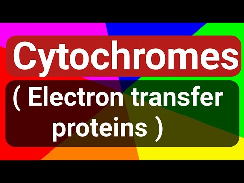 Cytochromes ( Electron transfer proteins) : structure and ac