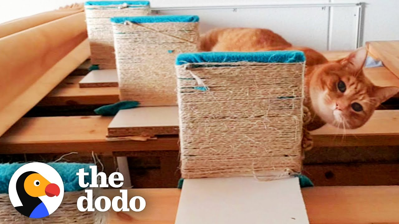 Senior Cat Has Stairs Built For Him To Reach Cuddles With His Favorite Person   The Dodo