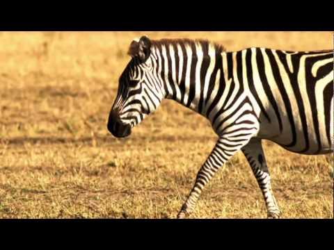 Kenya Tourism Board Commercial