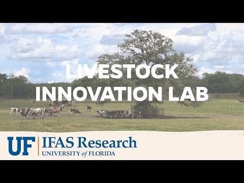 UF/IFAS Research | Feed The Future Innovation Lab For Livestock Systems