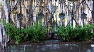 Plant City Bonsai   Mid Spring 2013   Color